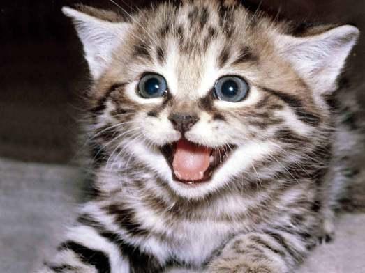 cute-kittens-12929201-1600-1200